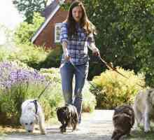 Chiedi a un dog walker: quanto vengono pagati i dog walker?